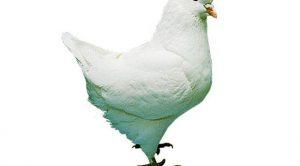 Rüyada Güvercin Görmek Nedir?
